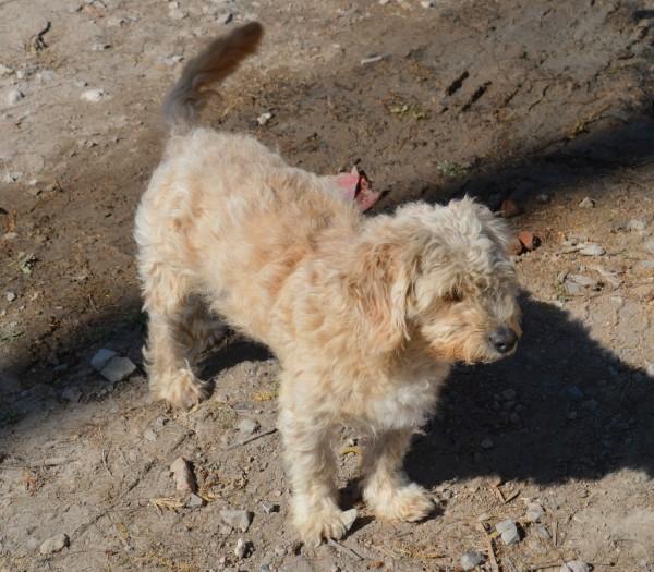 Dog at church building site in Ajijic - Chapala